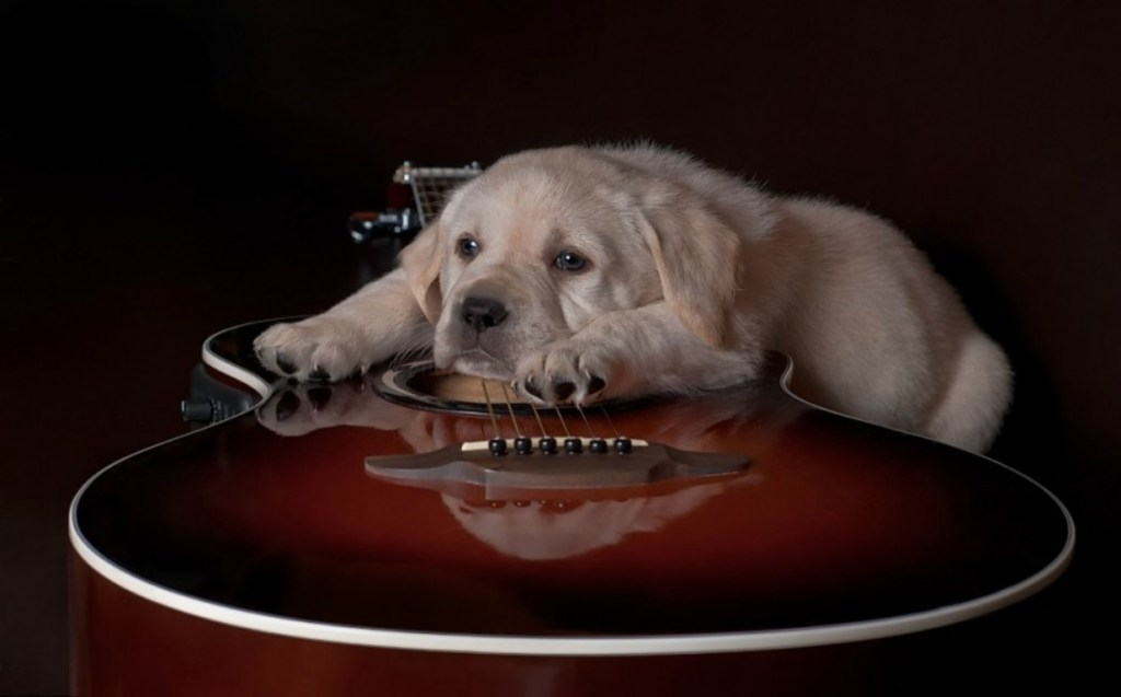 cute-dog-and-a-guitar