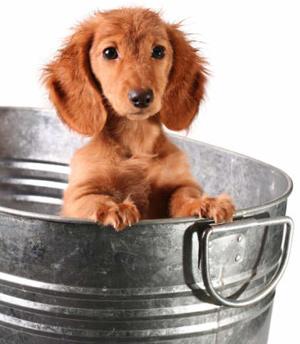 dog-bath-bucket