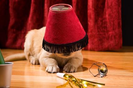 Golden Retriever puppy wearing a lamp shade