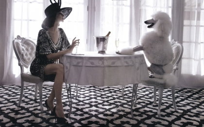 poodle and champagne