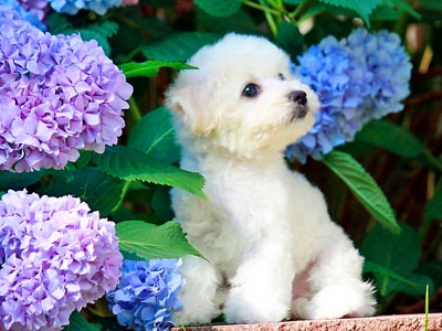 dog with blue flowers