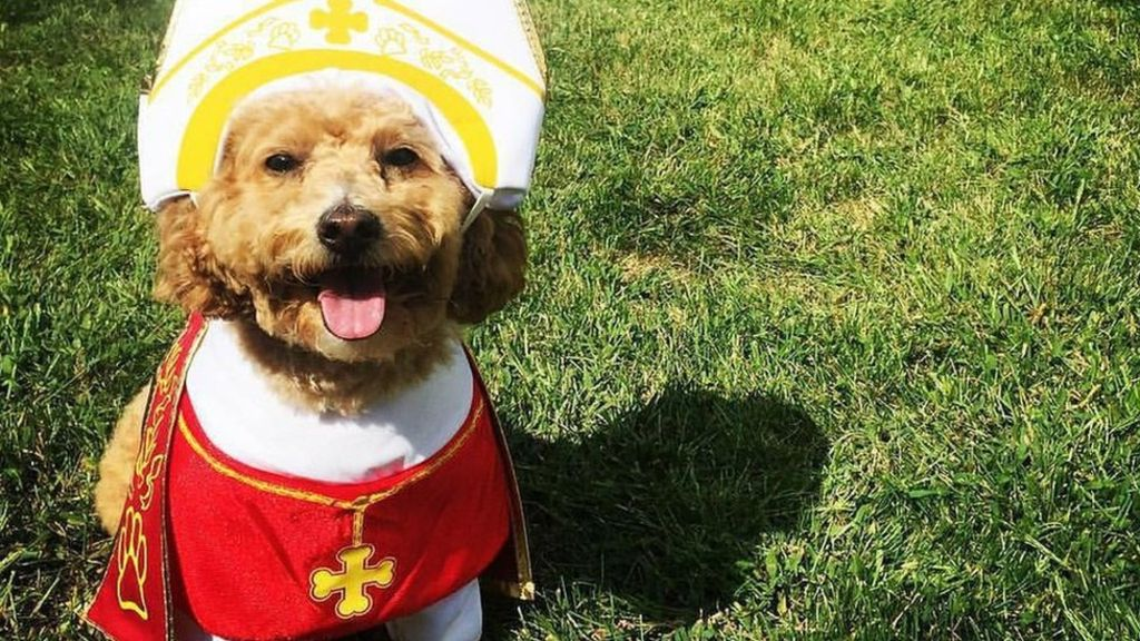 bbc.com pope dog