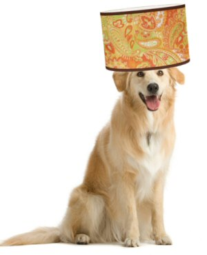 dog-with-lampshade