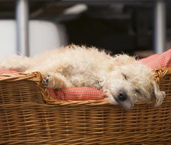 Dog bed 84464682