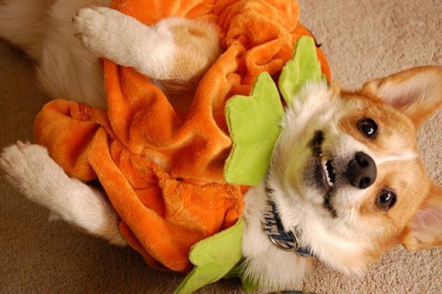 Dog-pumpkin-e1351462385262