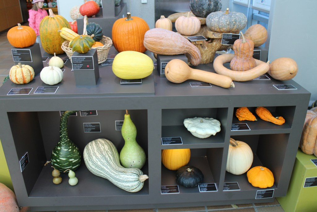 pumpkin decorating contest at Montreal Botanical Gardens