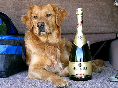 dog and champagne