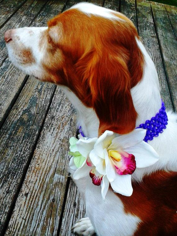 dog-flower-collar-pet-wedding-white-orchids-green-hydrangea-strech-fabric-pet-flower-dog-wedding-pet-corsage-dog-flower-clip-dog-bow