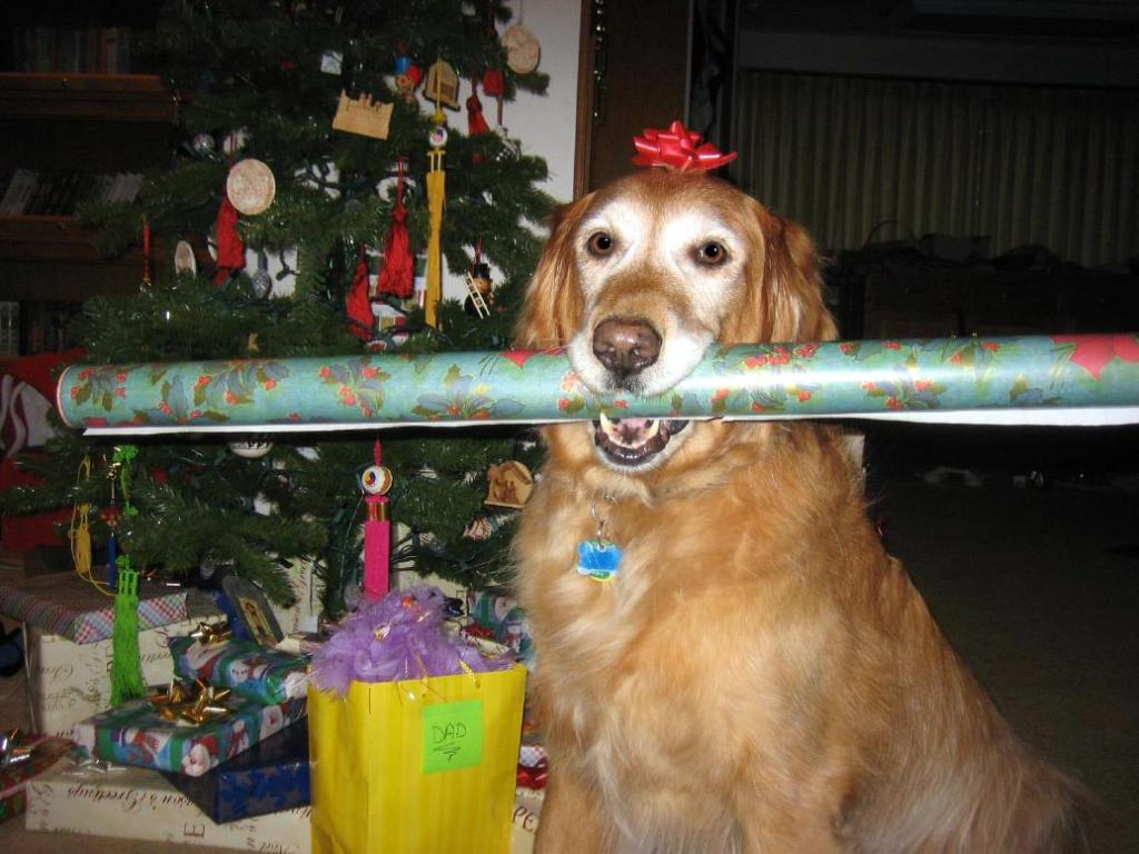 dog with wrapping paper1