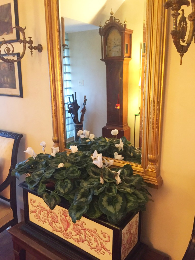 Flower of the Month January 2016 On Pinehurst Place