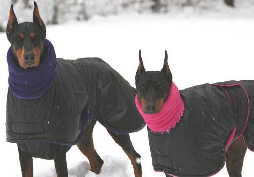 doberman-coats