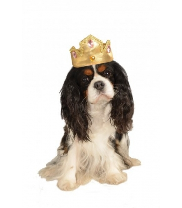 dog gold tiara