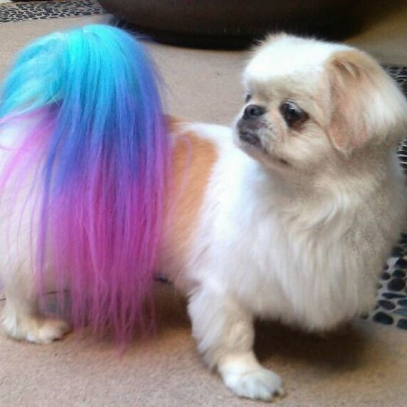 dog in pink and blue