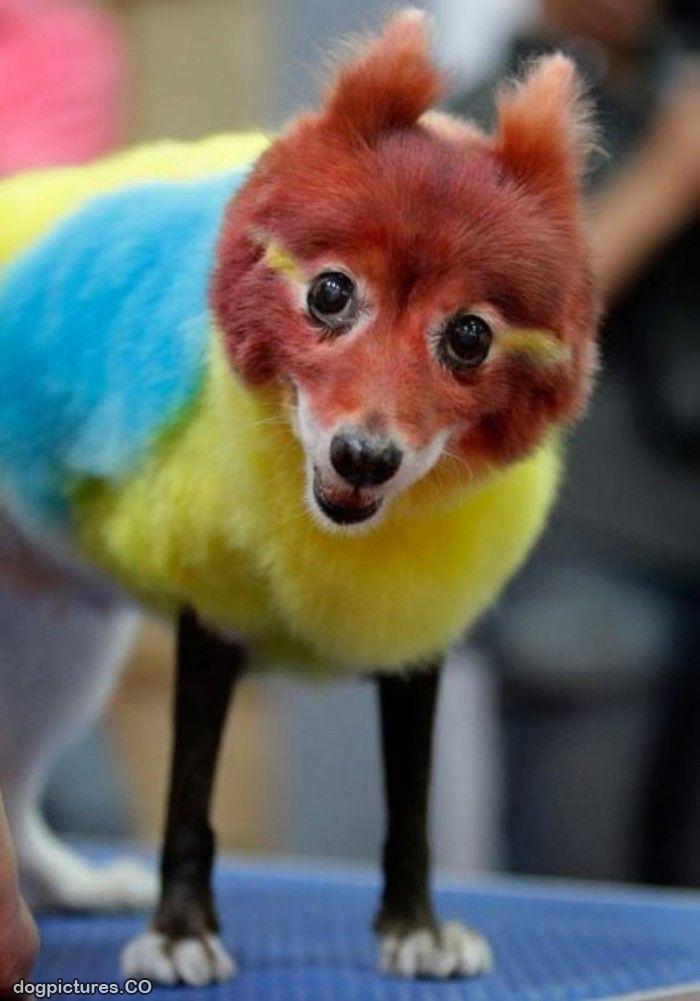 Colorful dog1