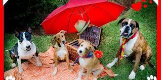 HON-dogs-picnic