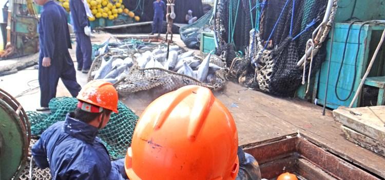 Majuro moves huge tuna volume