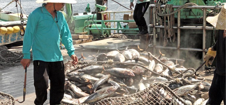 UN vote confirms World Tuna Day