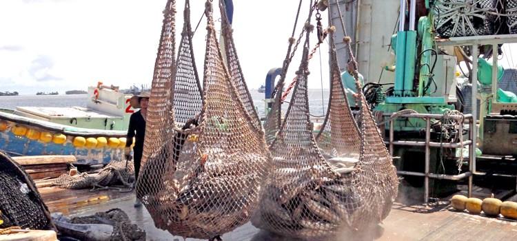 Tuna team to tighten lines