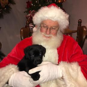 Santa and Turkey