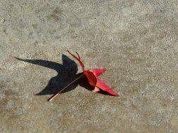 Serendipity—a leaf fairy