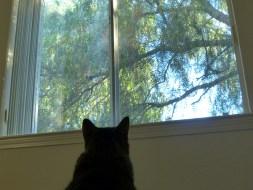 A window keeps what's outside outside.