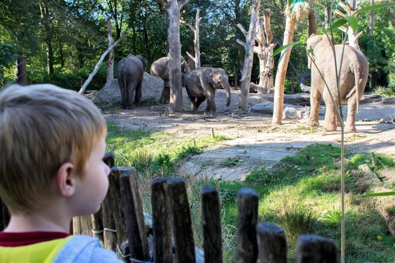 foto-4-olifanten-kijken_dsc5663