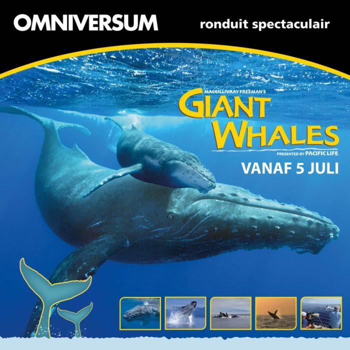 omniversum_giantwhales