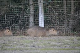 zooparc overloon