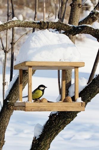 shutterstock_wintertuin2