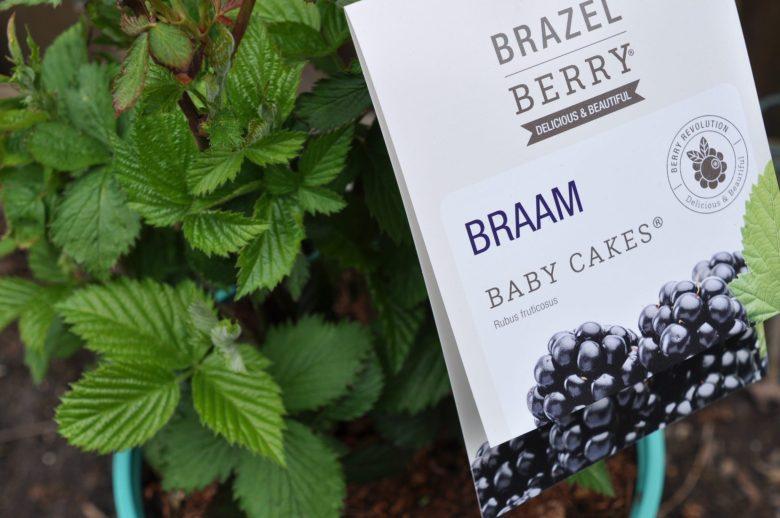 braam baby cakes