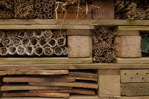 instectenhotel steigerhout