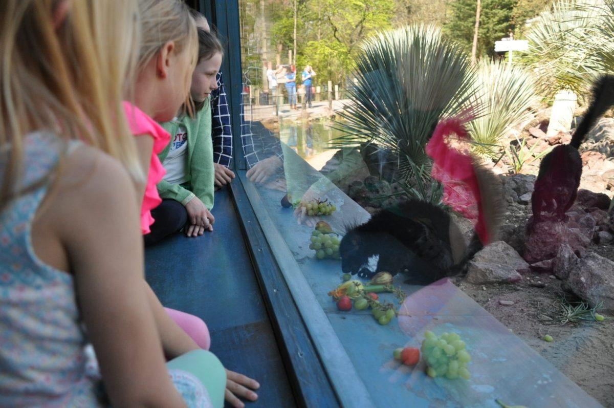 Keek op mijn Week: 2x bios, paasontbijt op school, dierentuin en botsing