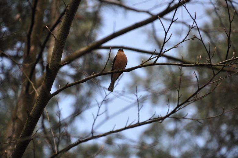 landal heideheuvel ervaring vogel