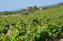reis naar costa daurada (181)