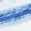 Enhancing leguminous plant nutrition via mycorrhiza symbiosis in a Martian simulated environment