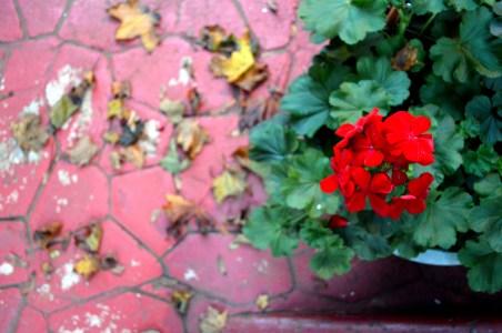 flowerleaves