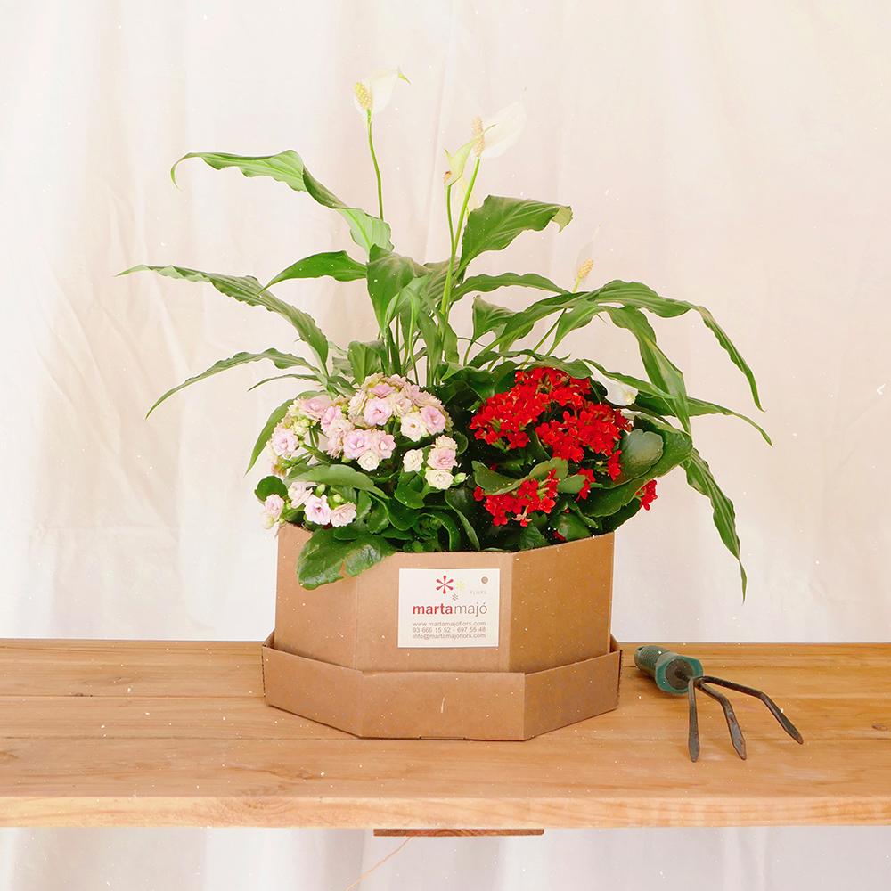 conjunt de plantes