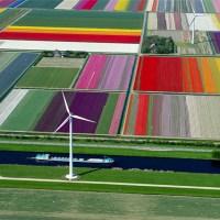 Aerial Photos of Tulip Fields
