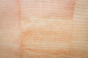 Sepia F, 2012 pen on tracing paper, 152,5 x 110 cm Detalhe