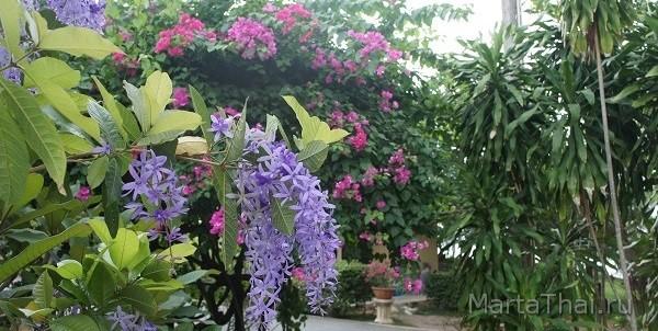 Thailand_Pattaya_Park_Viharnra_7