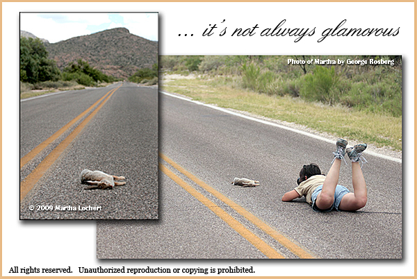 Photographing road kill