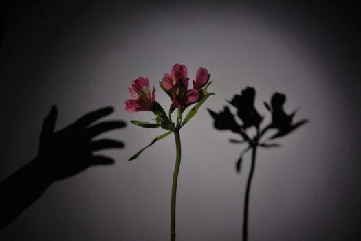 oscuridad y sombra martha lovera