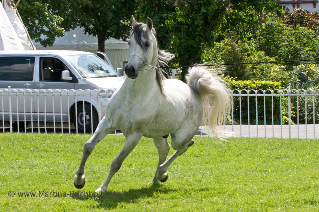 Arabian Horse Photography, Travel and Nature Photography ...