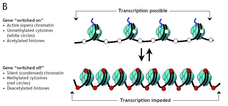 MethylationB