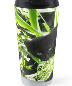 Black cat, green eyes