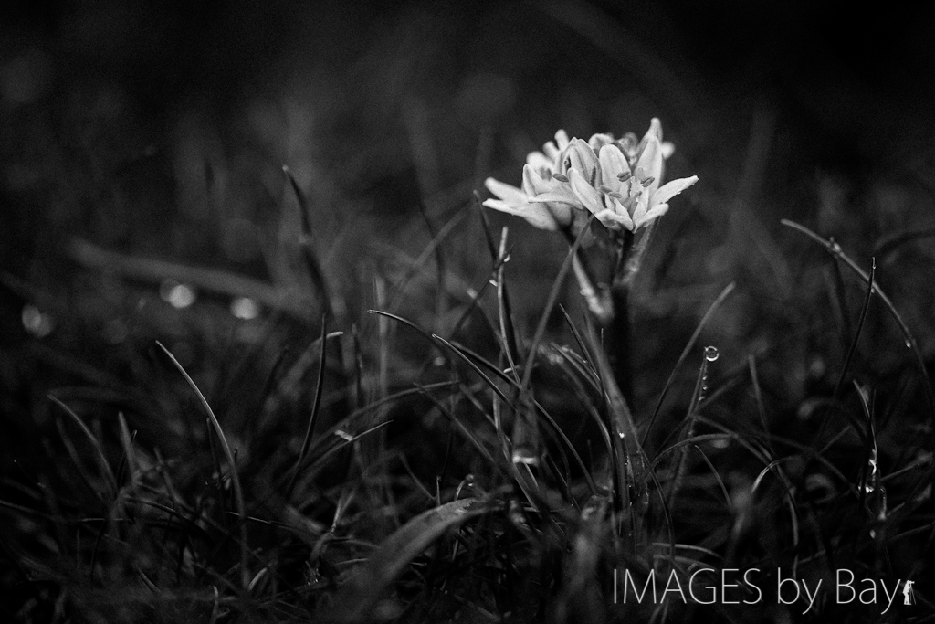 black & white flower image