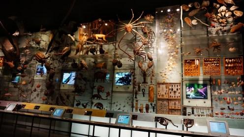 Crustaceans, Mumeceans