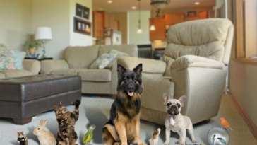 1566990737 Mascotas en casa Mascota Planet explica cómo mantener el hogar limpio teniendo mascota