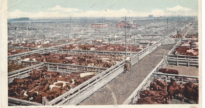 Moove over! It's time to embrace Kansas City's Cowtown Past