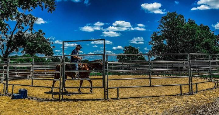 Horses provide therapy for vets at ranch in Stilwell, Kansas